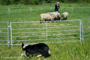 This photo shows a women guarding sheep and a dog that is being trained.